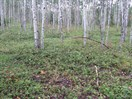 CEAB000209_aspen_common_blueberry_woodland