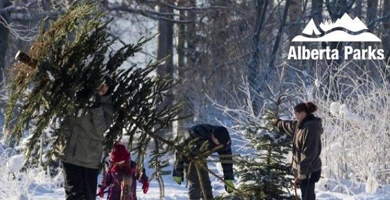 Alberta Parks Cypress Hills PP Activities & Events